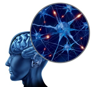 Marvelous More Brain Wiring Makes For A Sharper Mind Later In Life Wiring Digital Resources Hutpapmognl